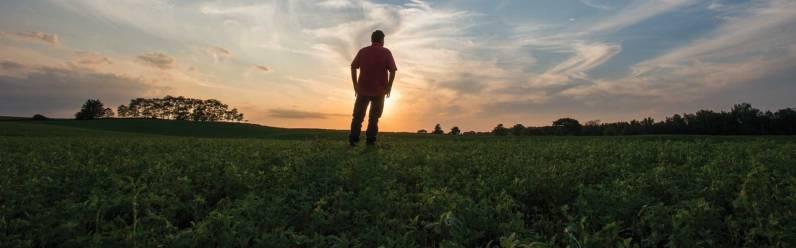 Kinnard Farms - Sunset