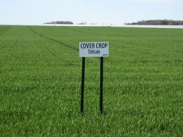 Kinnard_Farms-KF_Cover_Crop