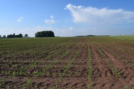Kinnard_Farms-KF_Crops4