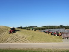 Kinnard_Farms-KF_Silage_Pile4