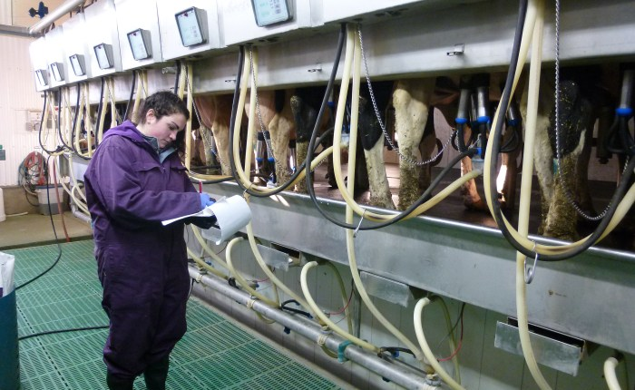 Cow comfort: Does making changes to the freestall area make a difference?