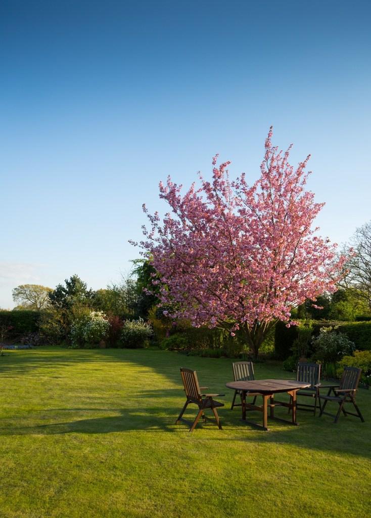 19 gardening tips yard that shows sun and shade