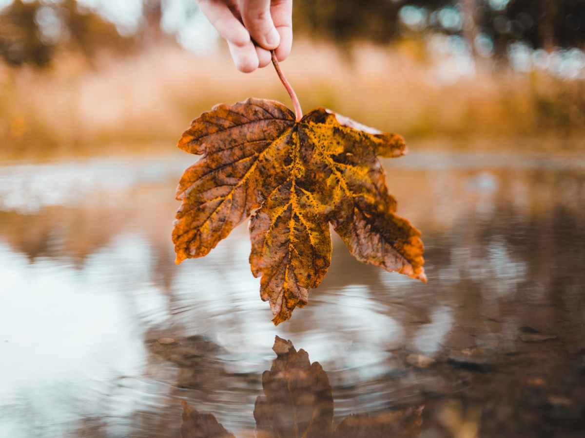 photo of person holding leaf