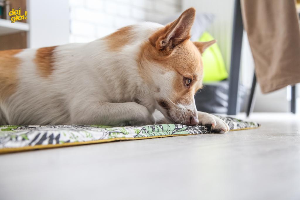 Mata dla psa - test zapachu