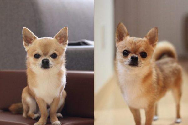 Маленькие собаки для квартиры: лучшие породы с фото (топ ...
