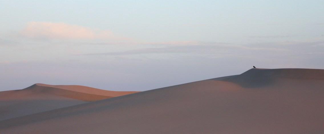 6 days #Dakhla #desert #dunes #DakhlaRovers