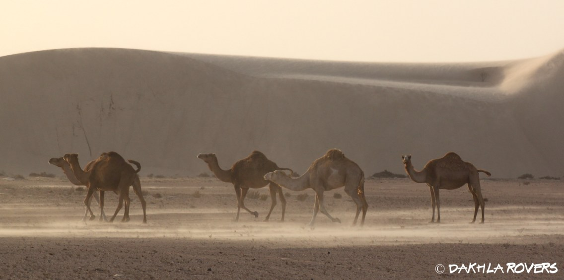 Dakhla Rovers, Desert Safari Tours