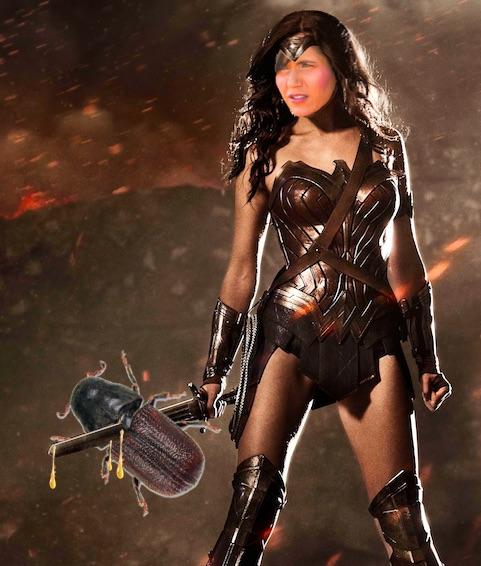 Kristi Noem as Wonder Woman vanquishing pine beetles.