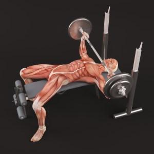 Anatomy of bench press