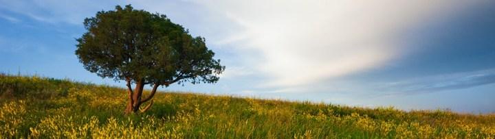 ND Landscape 4