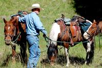 a-cowboy-and-his-horses-1305882