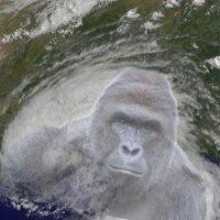 Hurricane Harambe, Pokemon Go! too