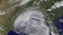 Hurricane: Harambe