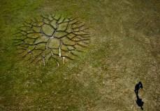world-tree-land-art-6