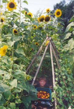 Super Sunflower Saturday