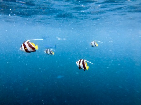 Feryna Wazheri's trip to Maldives (20)