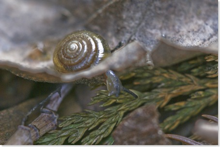 snail_on_the_run_5_thumb