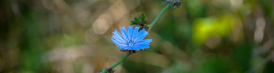 Wordless Wednesday: Wildflowers