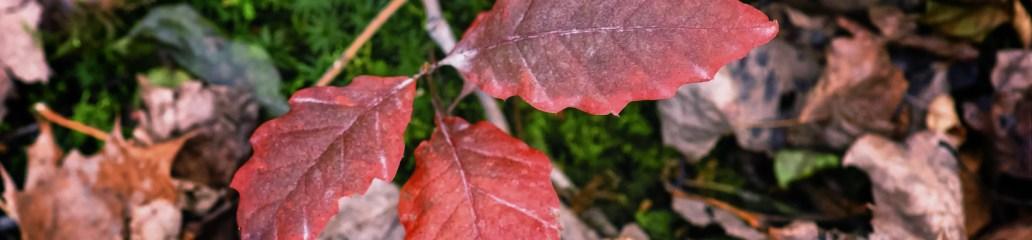 Single Frame: Autumn Close Up