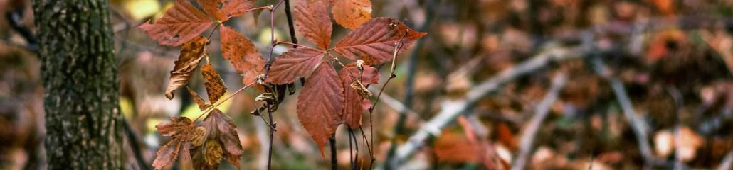 Single Frame: Autumn Close Up #2