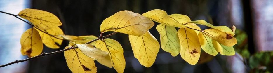 Autumn Close Up: A Photo Gallery