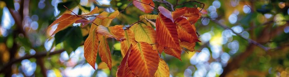 Autumn in Grant Park (Set 3 of 4)