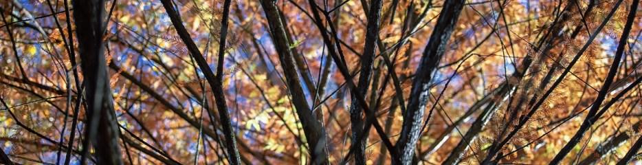 Autumn in Grant Park (Set 1 of 4)