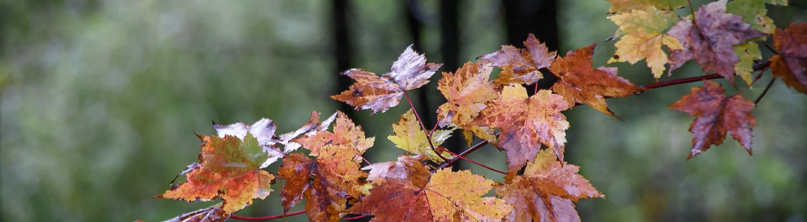 Single Frame: Autumn Close Up #18