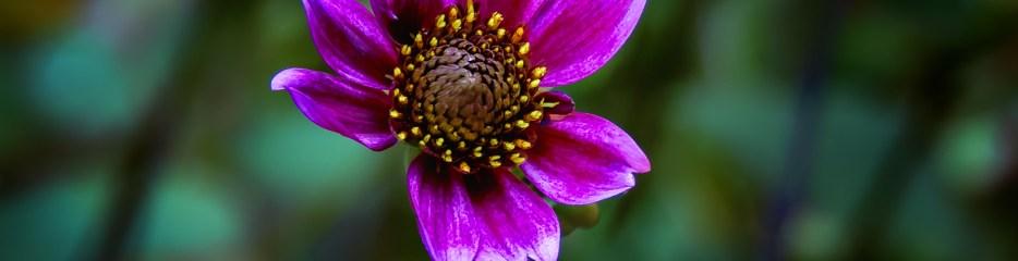 Wordless Wednesday: Five Found Flower Photos