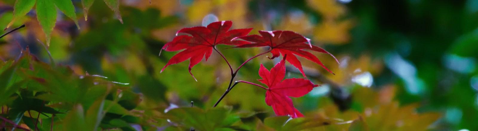 Autumn in Atlanta: Photo Mash-Up #1