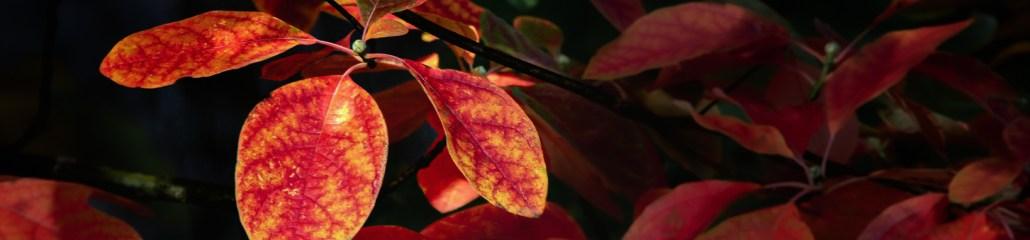 Wordless Wednesday: Burnt Orange and Singed Pumpkin