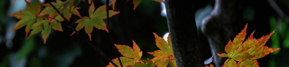 Wordless Wednesday: Autumn Tints at Twilight