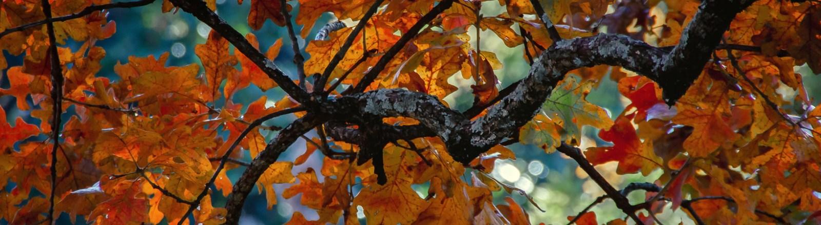 Autumn in Atlanta: Photo Mash-Up #5
