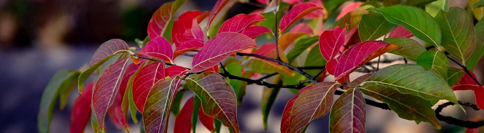 Autumn in Atlanta: Photo Mash-Up #7