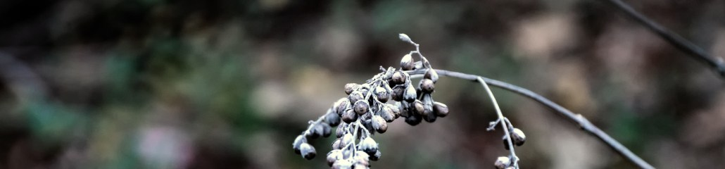 Winter Seeds and Berries (2 of 2)