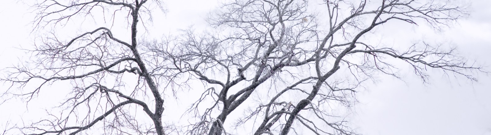 Winter Shapes and Forms (3 of 3)