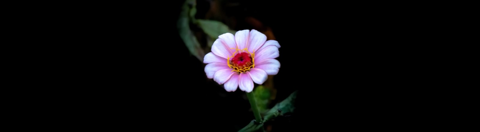 Ten Wildflowers and Three Butterflies