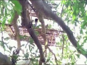 درختوں میں قرنطینہ