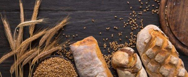 زراعة الحبوب في ولاية بولو