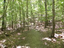 We love walking in the woods!