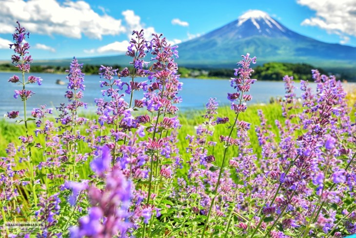 Fiji Japonia
