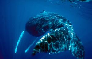 jpeg single whale