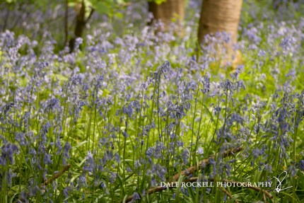 Bluebell Wood_19-05-13_IMG_1271