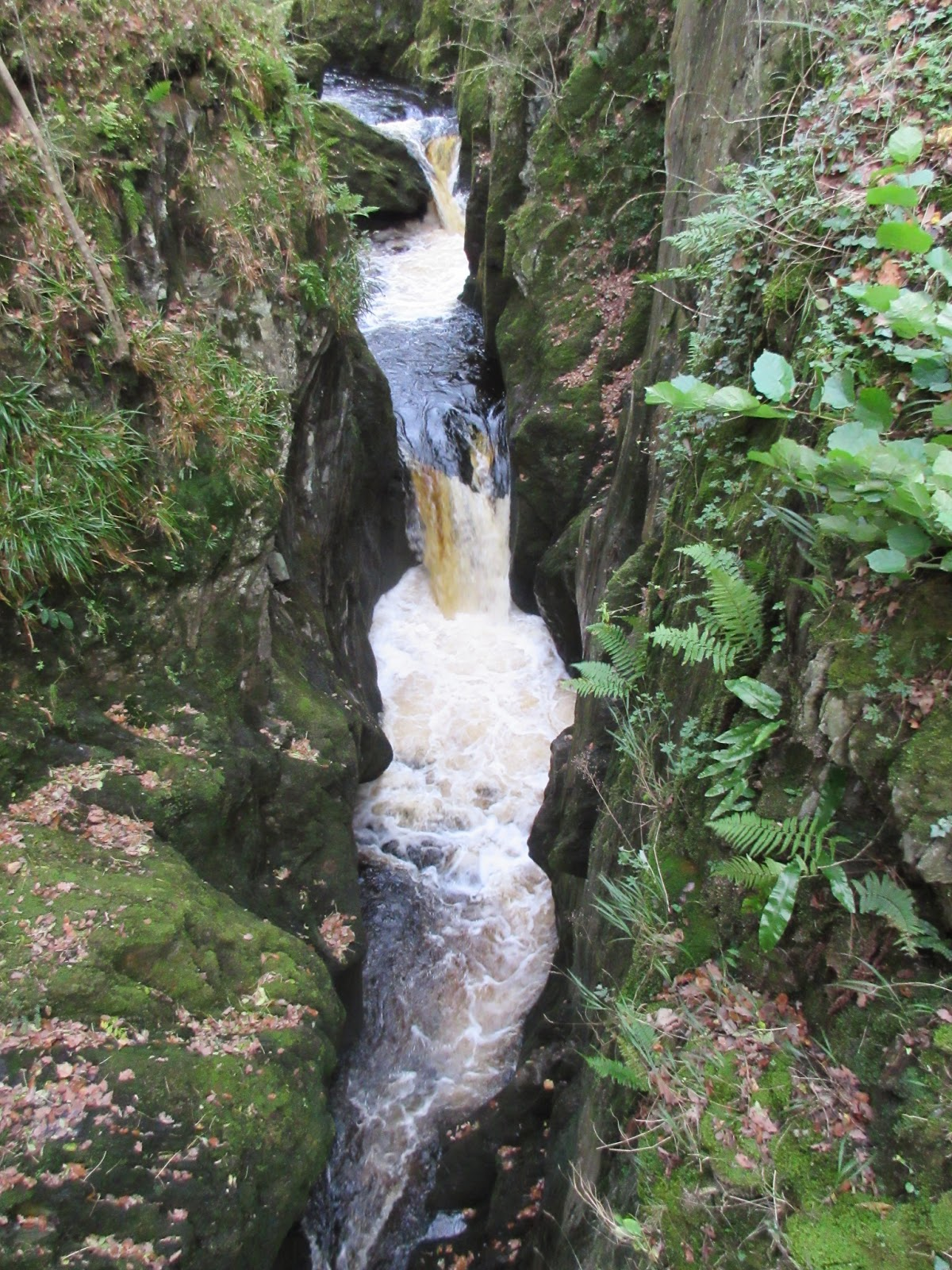 Baxenghyll Gorge sees the River Doe flowing through folded greywackes on the Ingleton Waterfalls walk (Stephen Oldfield)
