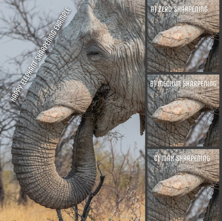 Happy elephant sharpening example - does software help you take sharper photos?