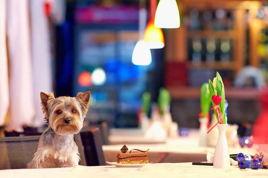 Dog-in-Restaurant