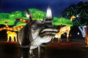 10best-holiday-events-update-2018-dallas-zoo_54_990x660 (1)