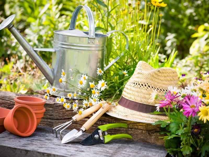 garden_gardening_gardener_tools_sun_hat_straw_hat_flower_pots_spade_rake_dig_shutterstock_107822084-800x600