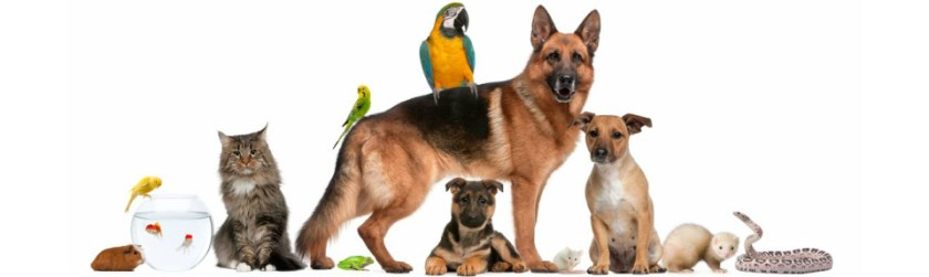 Five Life This Could http://www.maritimepetsupplies.ca/contact-us/ Enable Us Eliminate Man Diseases