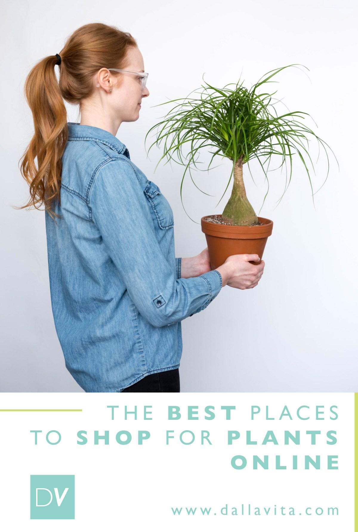 Best Online Plant Shops